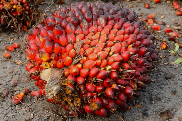 Sime Darby Palm Watch Africa