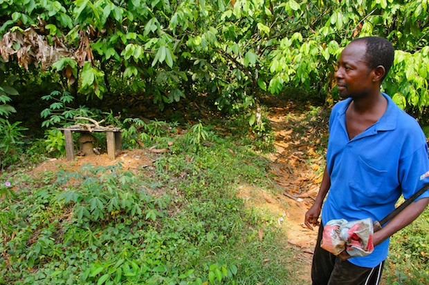 Entrance to cocoa farm in forest, Southwest Region, Cameroon. This land is earmarked for the Herakles Farms plantation.